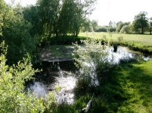 Great Crested Newt Survey site in Cheshunt, Hertfordshire