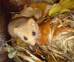 Dormouse Surveys