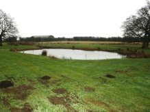 Extended Phase I and Great Crested Newt Survey site in Heyford, Oxfordshire