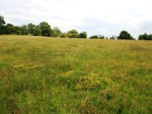 Great Crested Newt Survey site in Rowney Green, Worcestershire