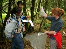 Ecologists working on a Dormouse survey